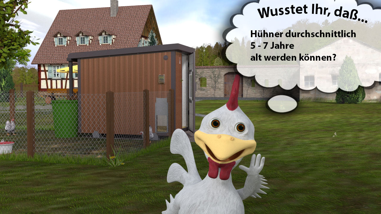 dummes huhn was nun
