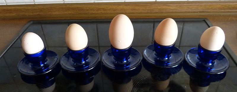 Eier verschiedener Rassen