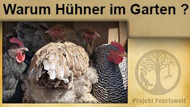 Warum Hühnerhaltung im eigenen Garten !?