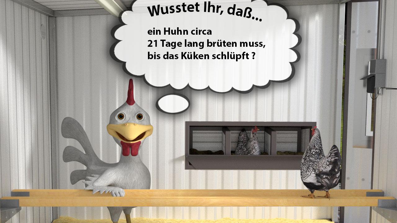 hühner brüten
